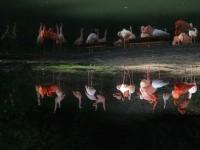 Flamingos und die Frage der Wirklichkeit der dritten Ordnung