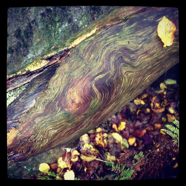 Naturholzgemälde