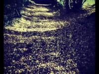 Herbstlichter 2