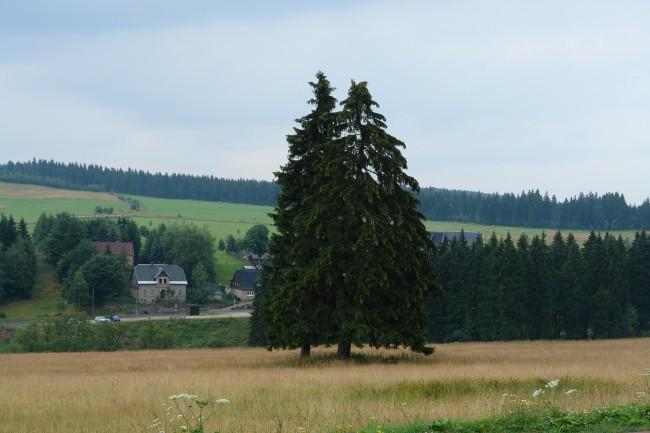 Sony DSC-R1 Motiv im Erzgebirge  - Foto: Michael Mahlke