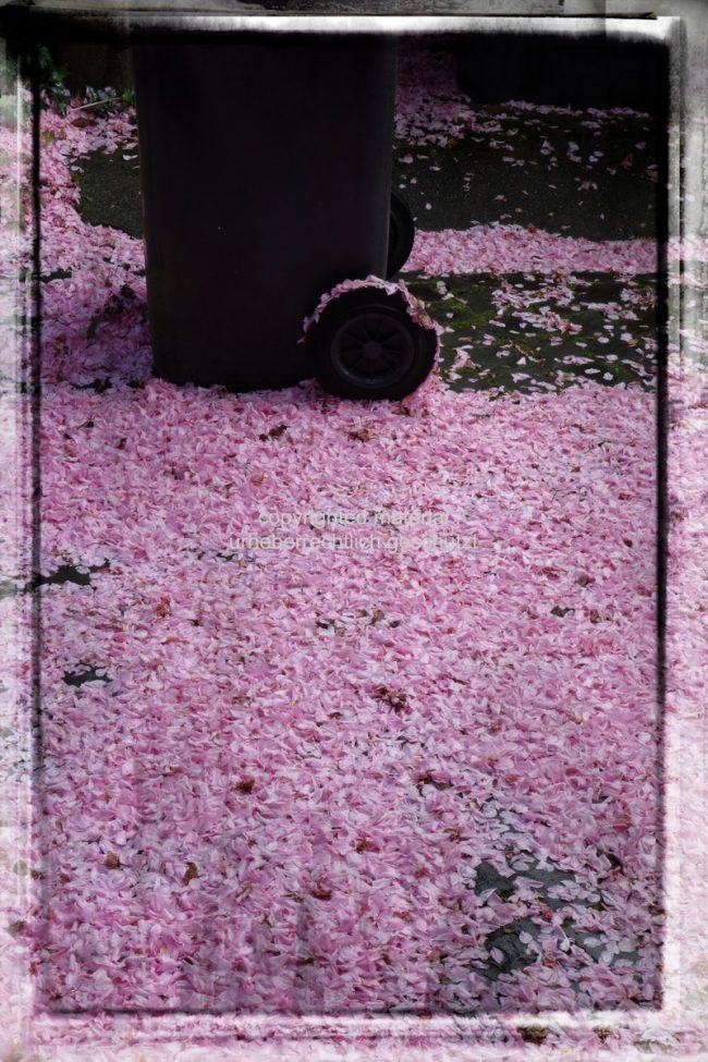 Jetzt ist der Frühling da – Springtime