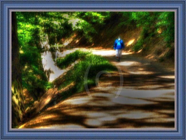 Bild der Zeit – Corona im Wald