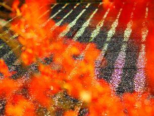 Abstrakt exakt fokussiert – neue subjektive Fotografie